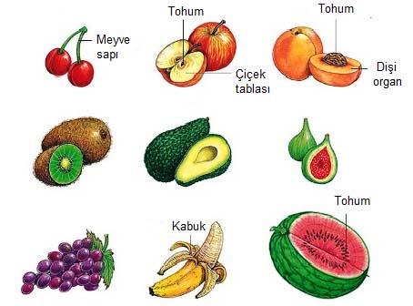 Meyveler ... Bitkilerin meyveleridir. Meyveler - Biyoloji