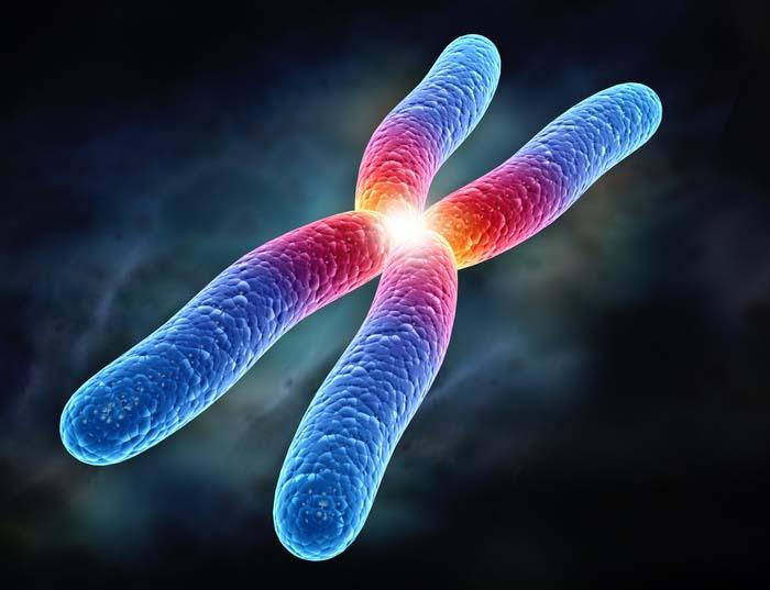 pinositoz ve fagositoz arasındaki farklar