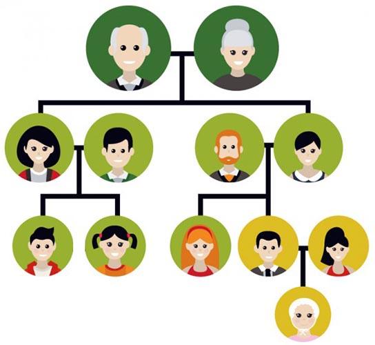 Biyolojisitesinet Kalıtımın Genel Ilkeleri Kromozom Teorisi Soy